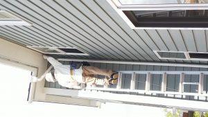 スズメバチの巣駆除作業 宮城県