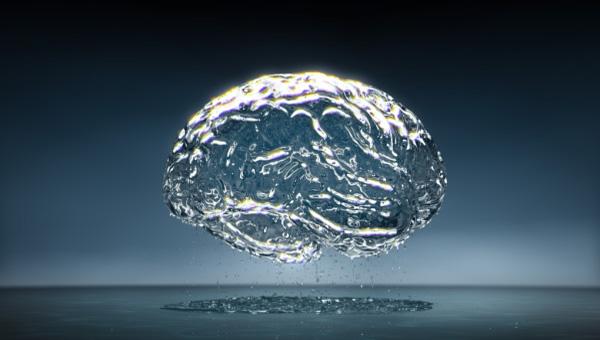 creier-limpede