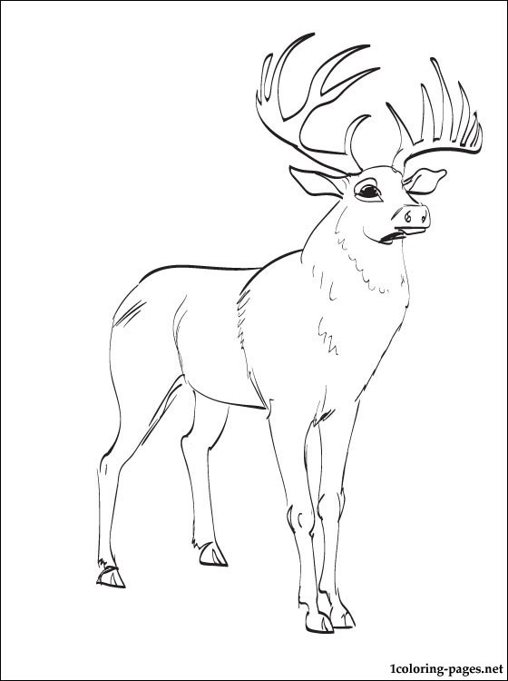 Top 20 Deer Coloring Pages For Your Little Ones | 750x560