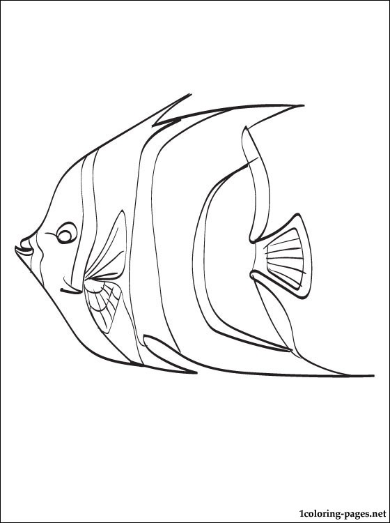 Angelfish Coloring Page Coloring Pages