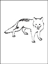 arctic fox polar fox coloring page for free coloring pages