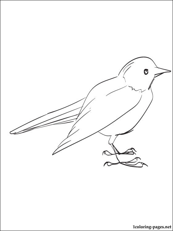 Blackbird Coloring Page For Free Coloring Pages