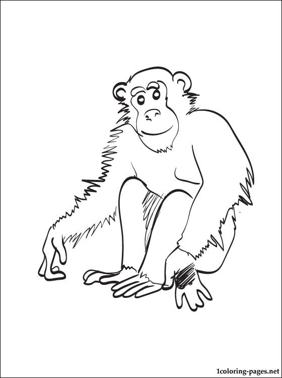chimpanzee coloring page coloring pages