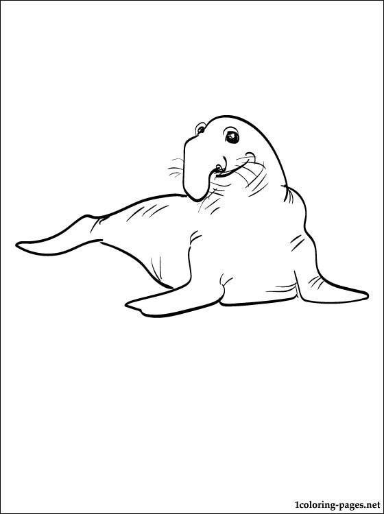 Coloring Page Elephant Seal Coloring Pages