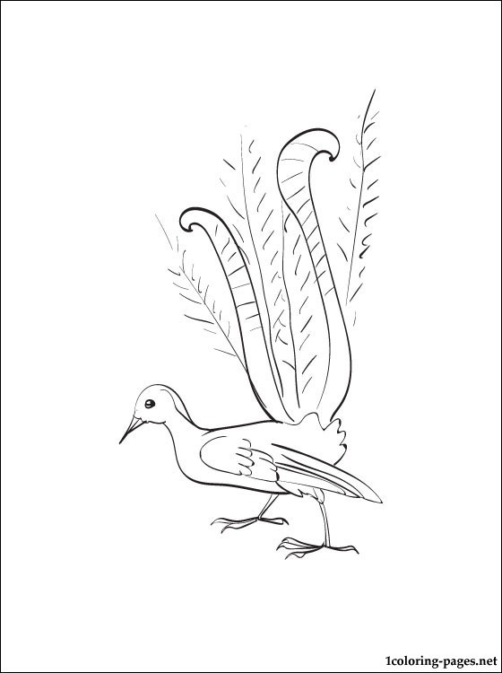 Lyrebird Coloring Page Coloring Pages