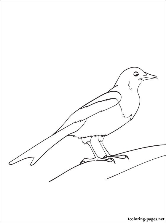 Magpie Coloring And Printable Page Coloring Pages