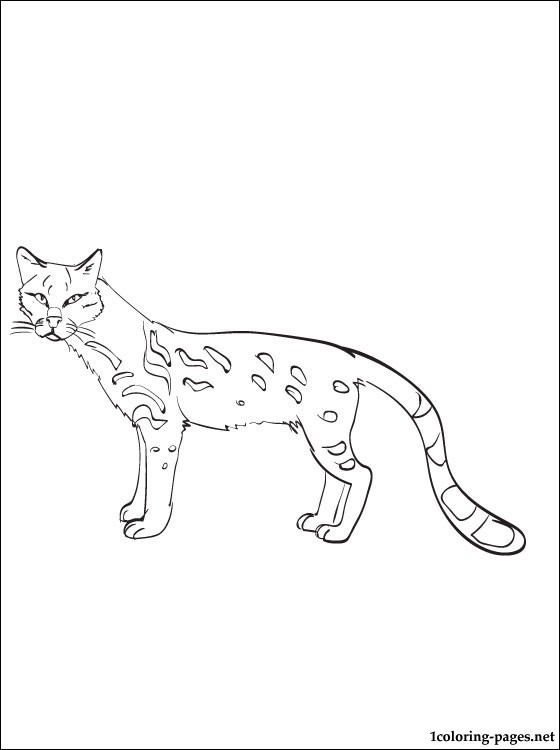 Ocelot Coloring Page Coloring Pages