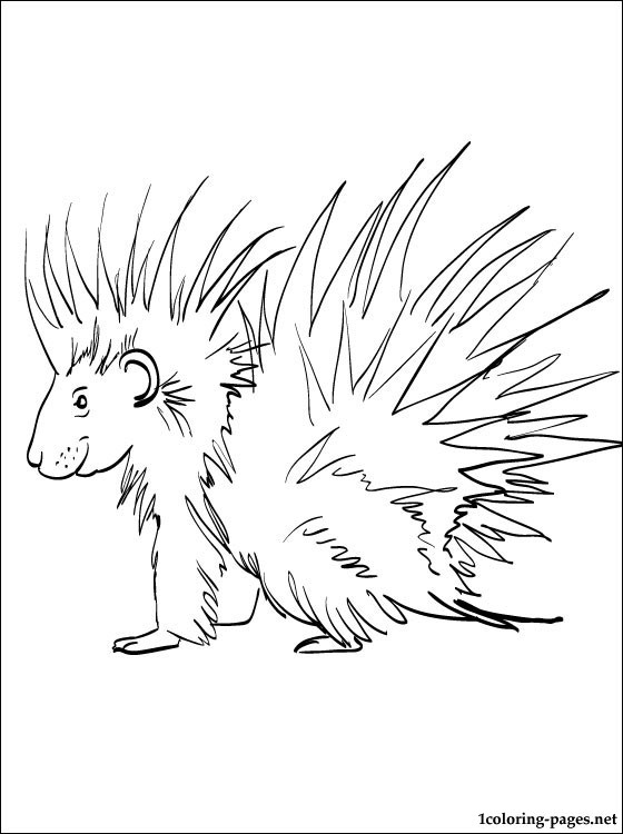 porcupine coloring page coloring pages