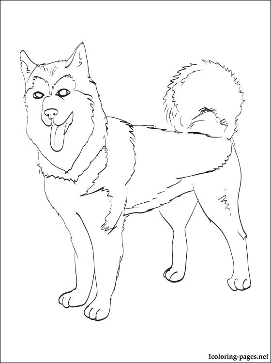 alaskan malamute coloring page  coloring pages