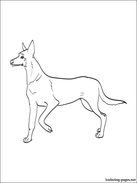 Malinois Coloring Page Coloring Pages