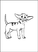 chihuahua coloring page coloring pages