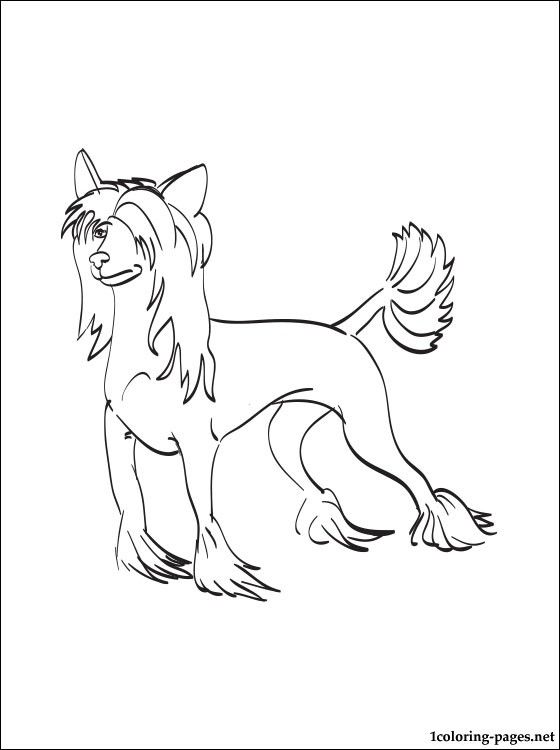 Chinese Crested Dog Coloring Page Coloring Pages