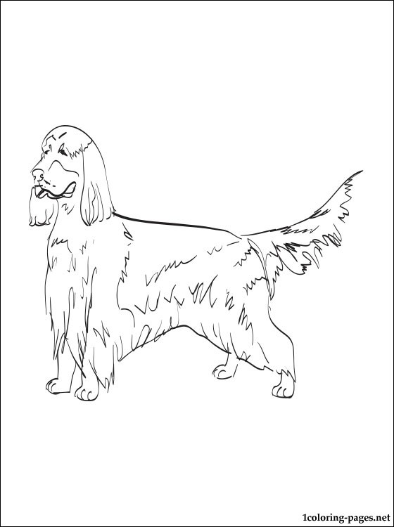 Gordon Setter Coloring Page Coloring Pages