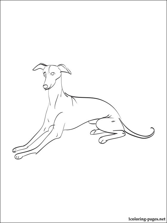 Greyhound Coloring Page Coloring Pages