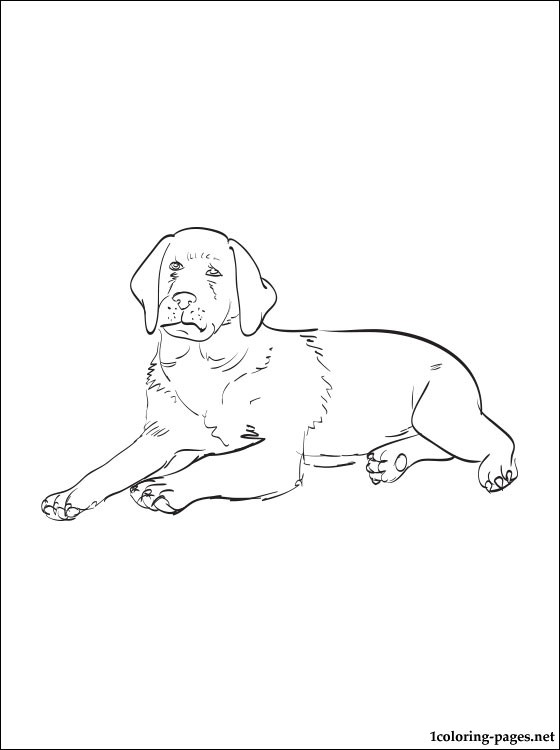 lab dog coloring sheets coloring pages
