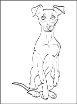 Miniature Pinscher Coloring Page Coloring Pages