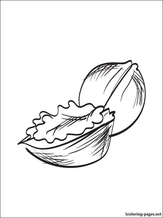 Walnuts Coloring Page Coloring Pages