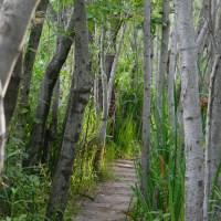 El camino verde…