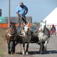 En el sur de Uruguay..., Hombre que vas con tus caballos...