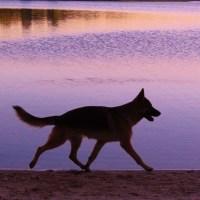 Un perro caminando sobre colores mágicos...
