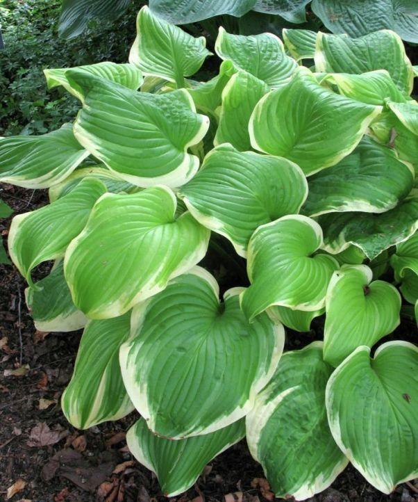 Найдено на сайте longfield-gardens.com