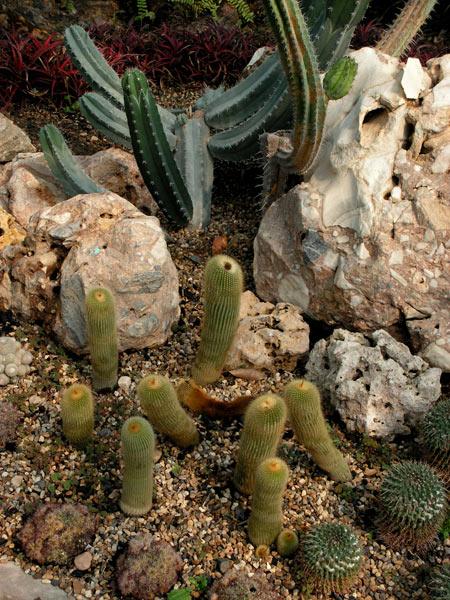 кактусовый сад фото 6