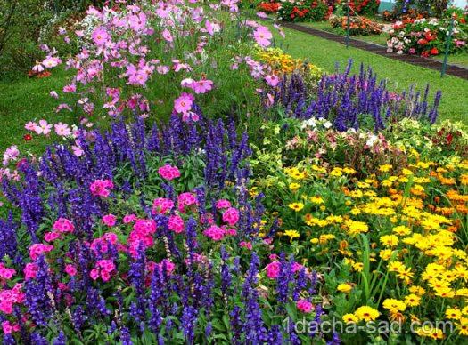 посадка цветов весной