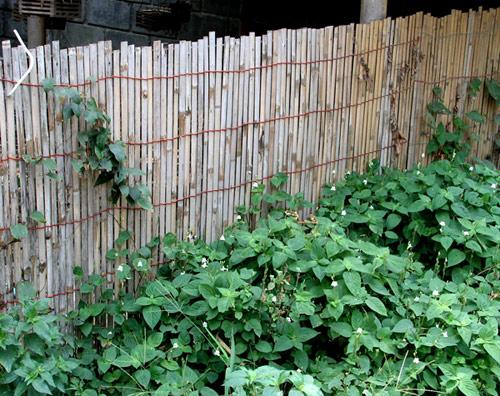 забор из бамбуковой рогожки