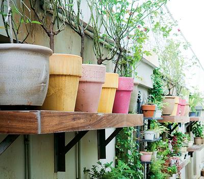 новые идеи для сада и огорода 1