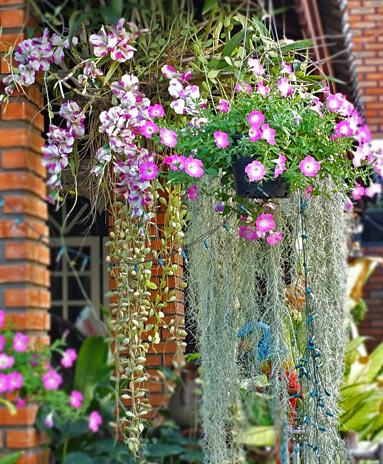 ампельные растения фото