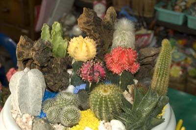 Красивая композиция из кактусов и суккулентов