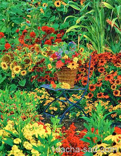 схема многолетнего цветника