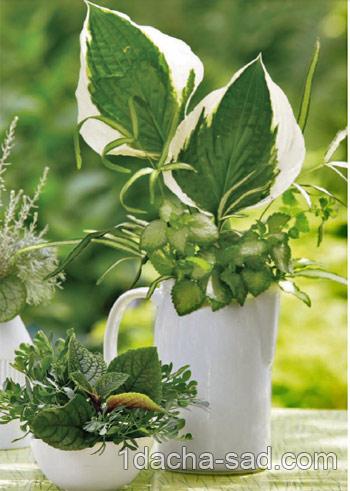 букеты из растений (4)
