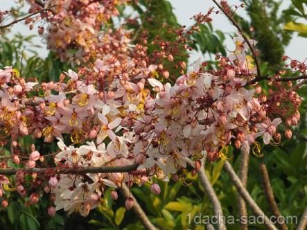 цветущие деревья фото (3)