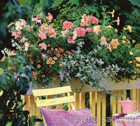 Ампельные цветы в озеленении балконов и террас 01
