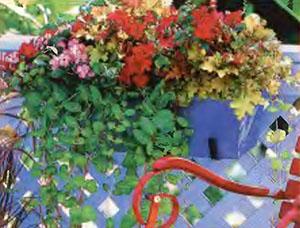 Ампельные цветы в озеленении балконов и террас 11