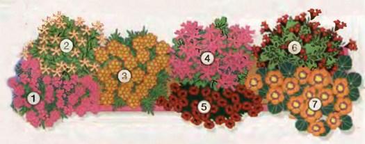 Ампельные цветы в озеленении балконов и террас 1