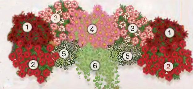 Ампельные цветы в озеленении балконов и террас 4