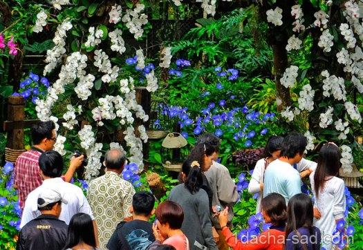 красивый сад Mae Fah Luang (24)