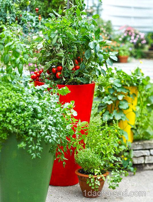 Технология выращивания овощей и зелени в домашних условиях 5