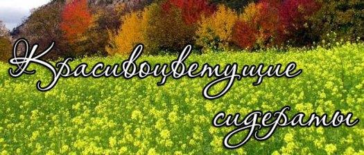Красивоцветущие растения сидераты