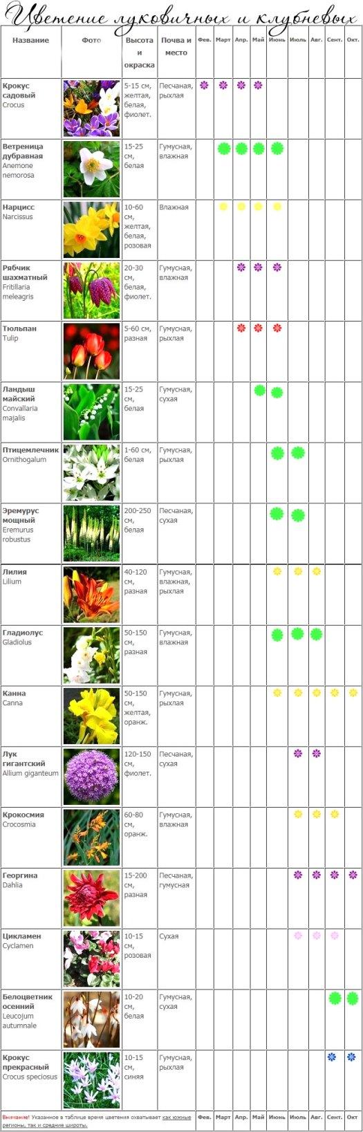 Календарь цветения луковичных 3