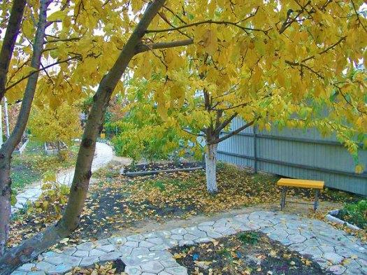 Дорожки в саду осенью