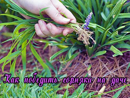 Как победить сорняки на даче при помощи гербицидов