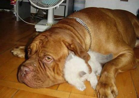 catanddogstories06mu86.jpg