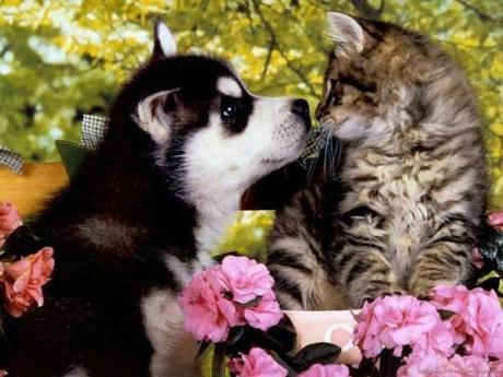 catanddogstories19yv5.jpg