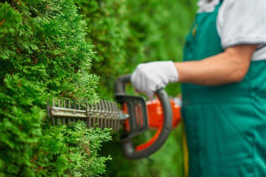 jardin entretien toulouse