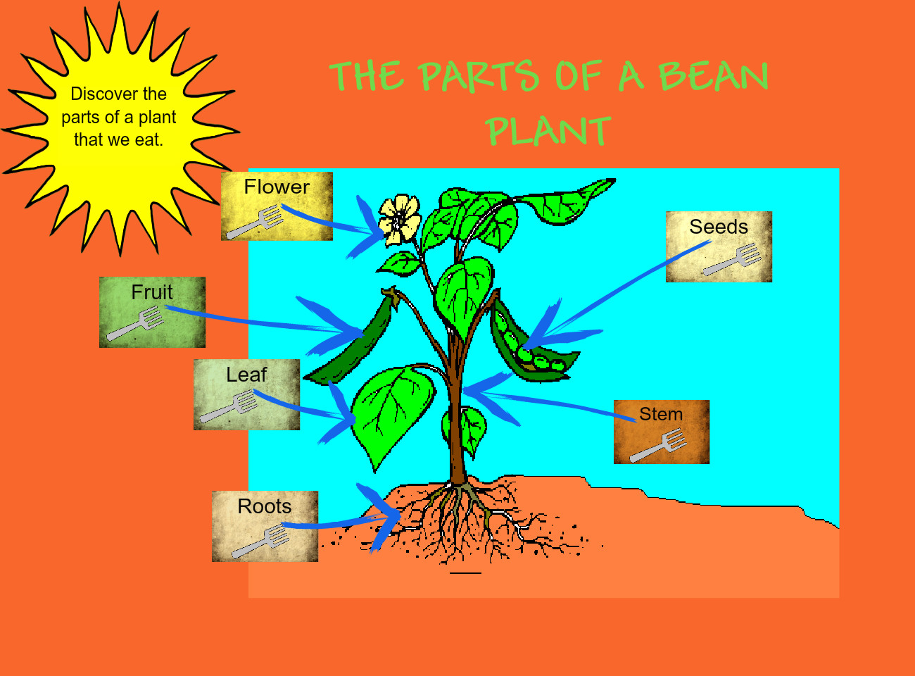 Parts Of Plants We Eat Text Images Music Video