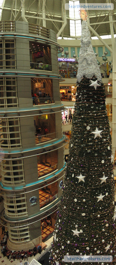 Surely one of the tallest Christmas trees around