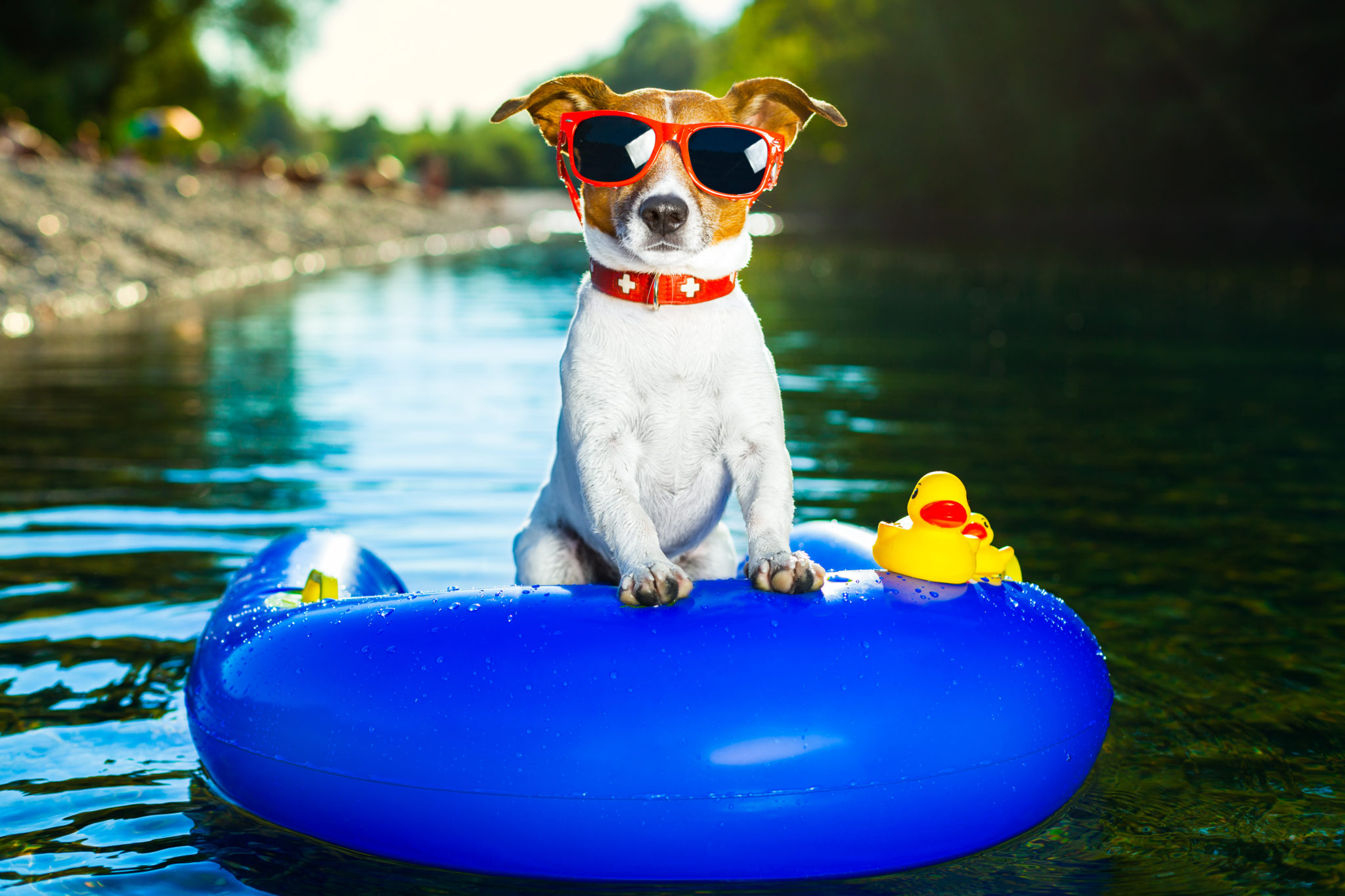 Dog Daycares With Pools Are Having Their Day In The Sun